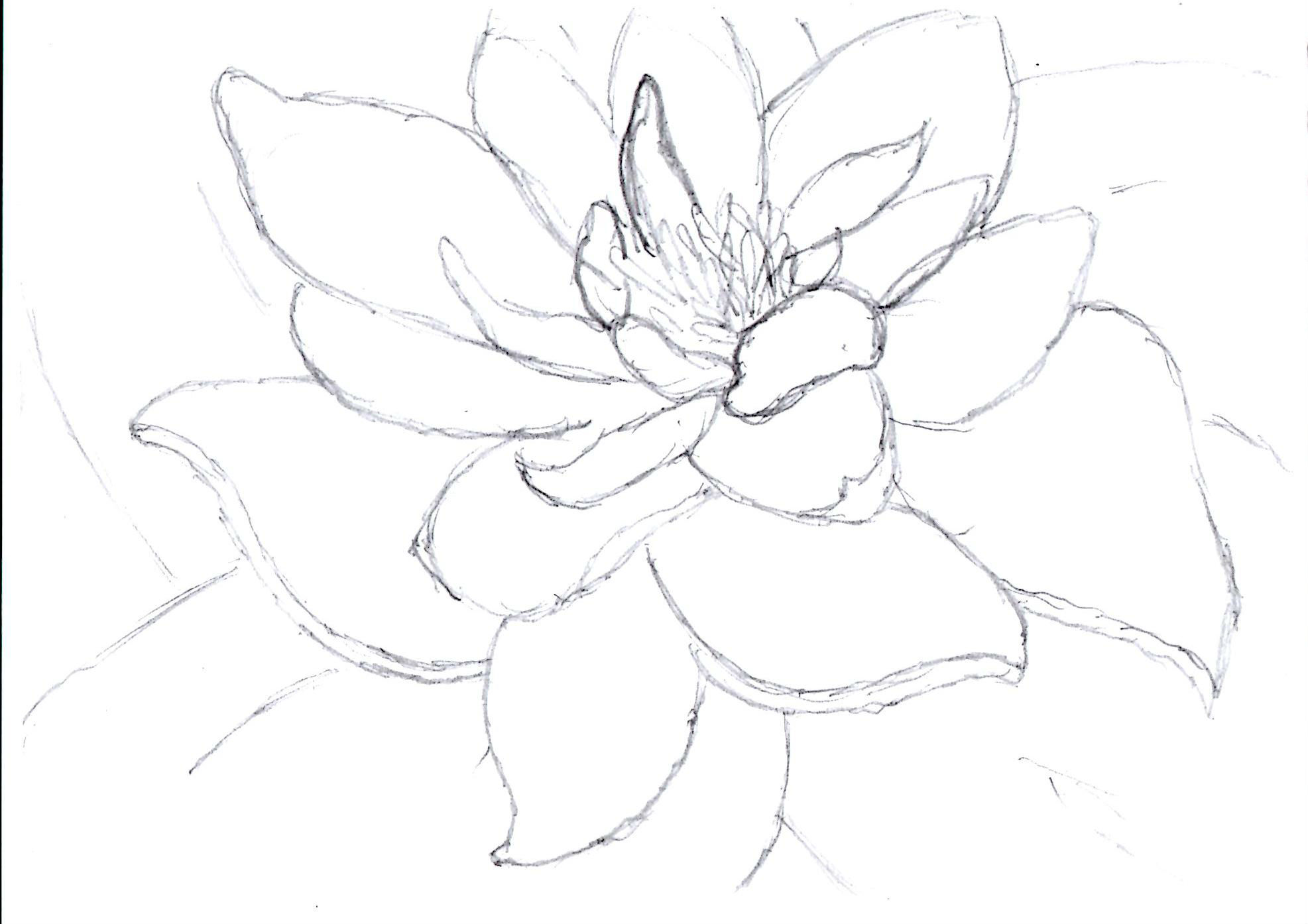 Uncategorized Lilly Pad Drawing lily pad drawing a life savored drawing