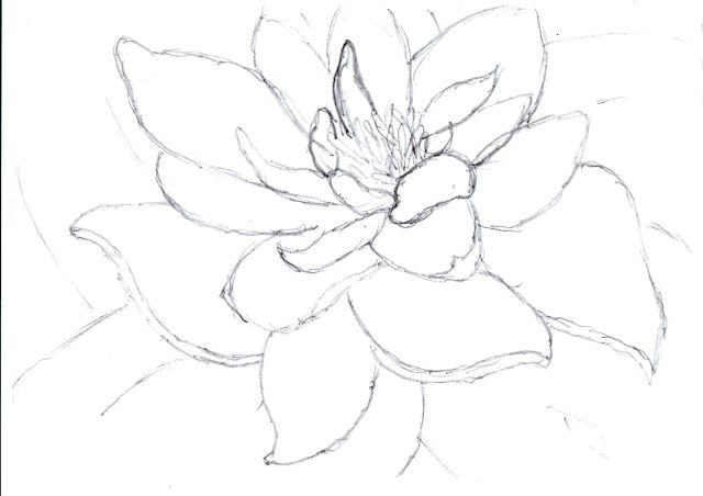 Lily Pad Drawing