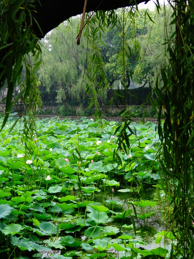 Lily Pond through weeping willow
