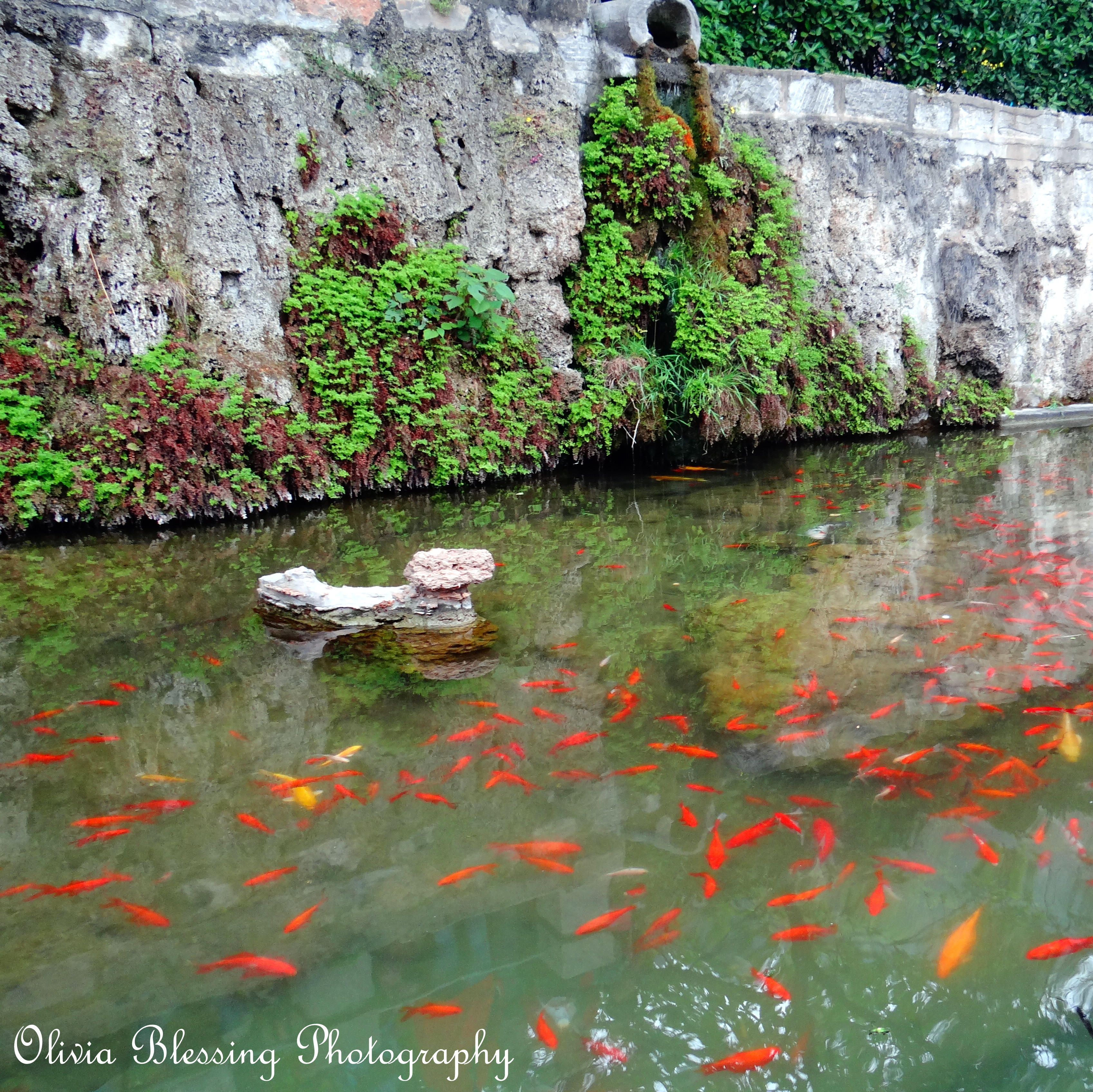 Big fish in a small pond a life savored for Big fish in a small pond